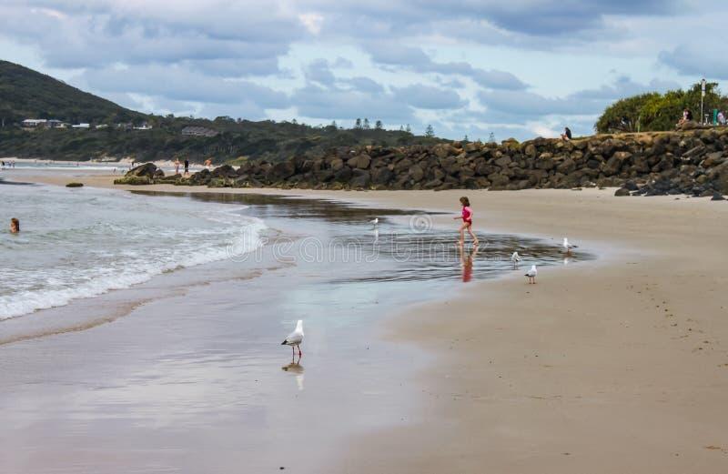 Lilla flickan i rosa baddräktspring in mot havet som havsfiskmåsar står omkring, och hon reflekteras i vatten på stranden - annan arkivfoton