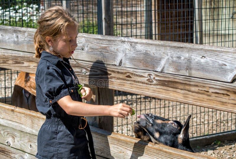Lilla flickan matar vänliga getter på en zoo arkivbild