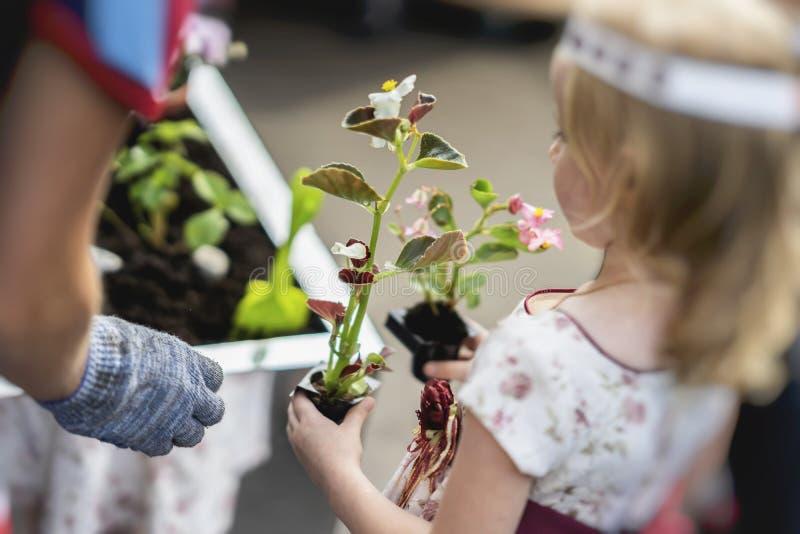 Lilla flickan med plantor av blommor i plast- krukor hjälper familjen i utomhus- arbete för våren som planterar växter arkivfoton