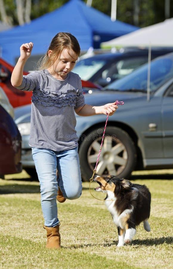 Lilla flickan och behandla som ett barn valplaget som öva för den gående cirkeln för hundshowen royaltyfria foton