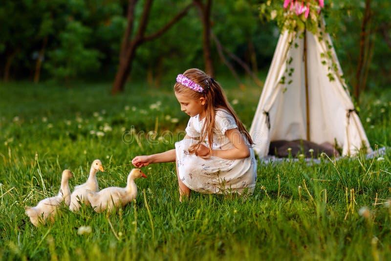 Lilla flickan som spelar med, behandla som ett barn änder Härligt djur royaltyfria foton