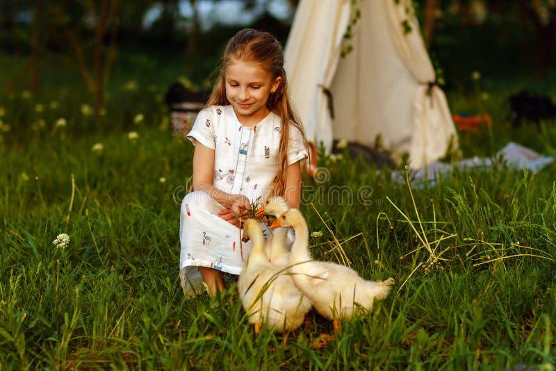 Lilla flickan som spelar med, behandla som ett barn gåsen Härligt djur fotografering för bildbyråer