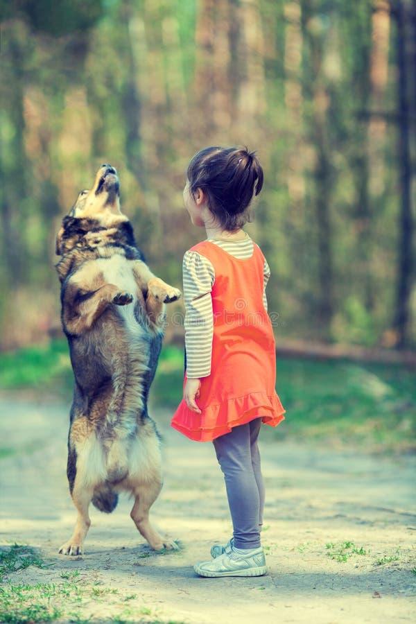 Lilla flickan undervisar hunden att utföra kommandot royaltyfri bild