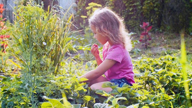 Lilla flickan väljer jordgubben, medan sitta nära växtsängen i trädgården arkivfoto