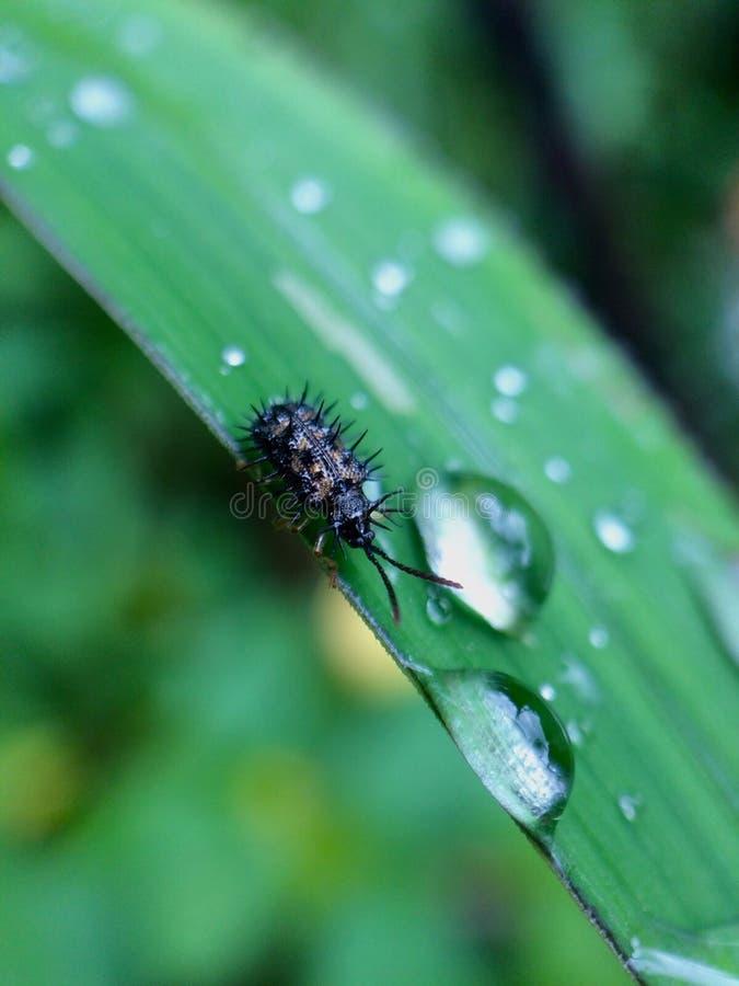 Lilla gröna växter i för naturfoto för makro Photography arkivbild