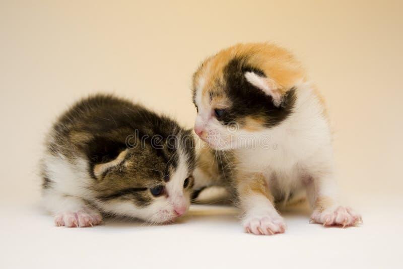 lilla katter fotografering för bildbyråer