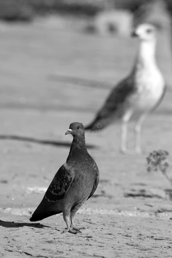 Lilla och stora stås fåglar arkivfoton