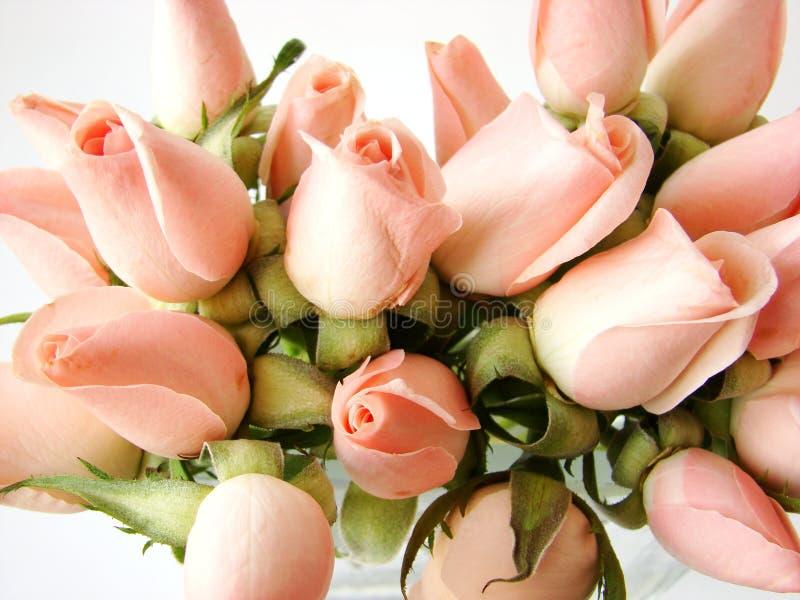 lilla rosa ro för bukett royaltyfri fotografi
