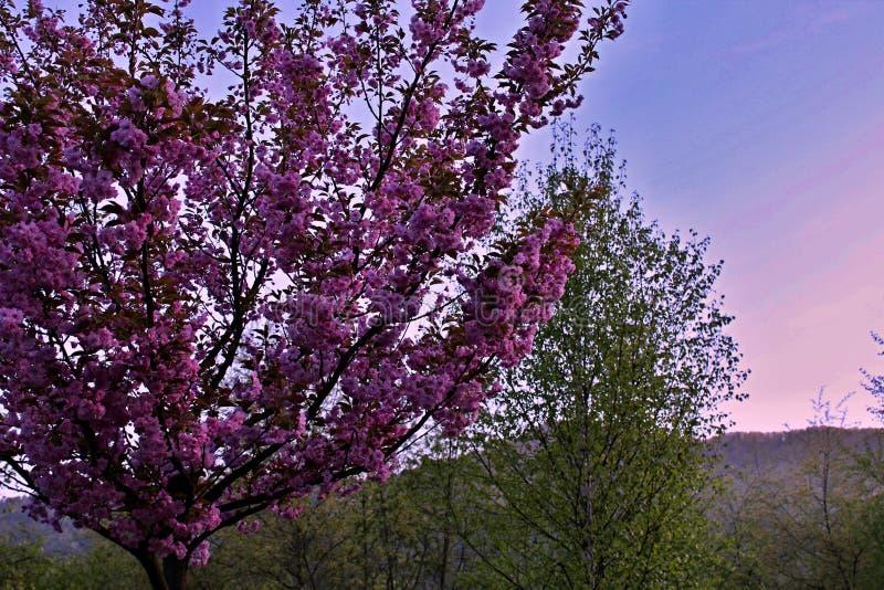 Lillfingervärld och natur från Slovakien arkivbild