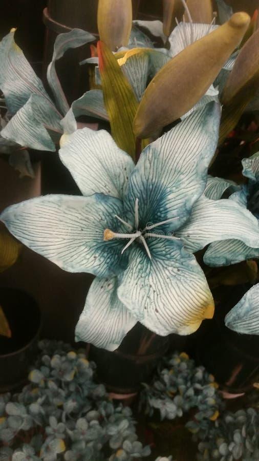 Lillie della tigre di Teal fotografie stock