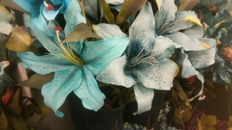 lillies fotografia stock libera da diritti