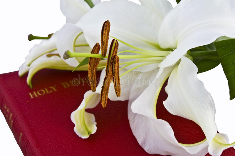 Lillies on Christian Bible. White lilies on red Christian Bible and isolated on white background stock photo