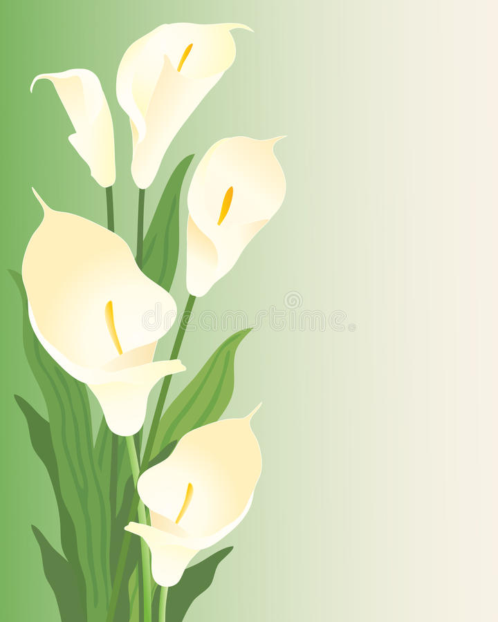 Lillies de calla illustration de vecteur
