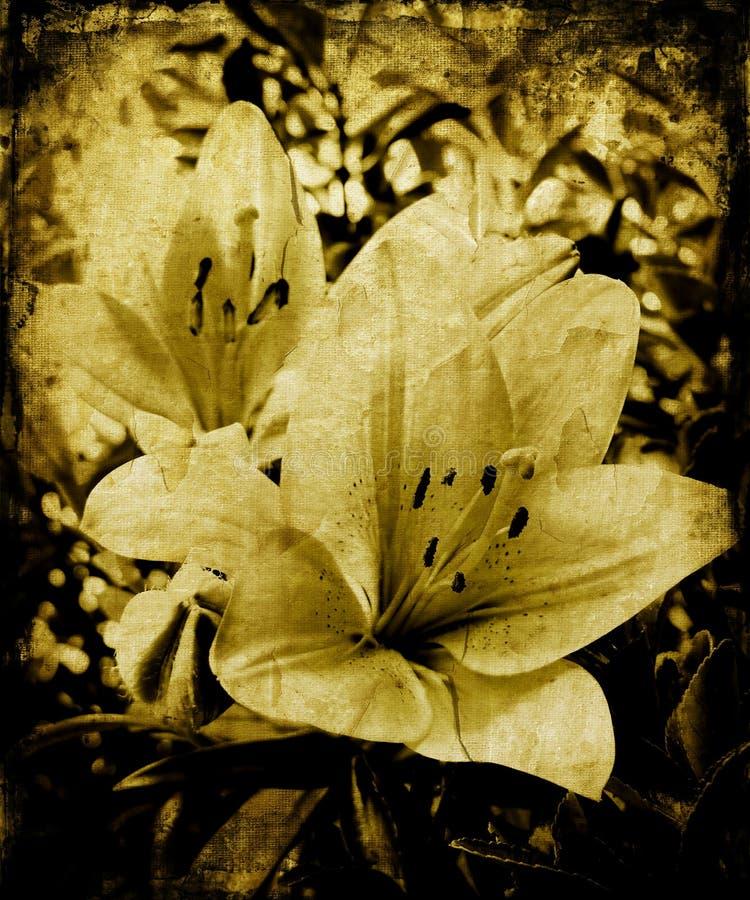 Lillies de Grunge ilustração royalty free