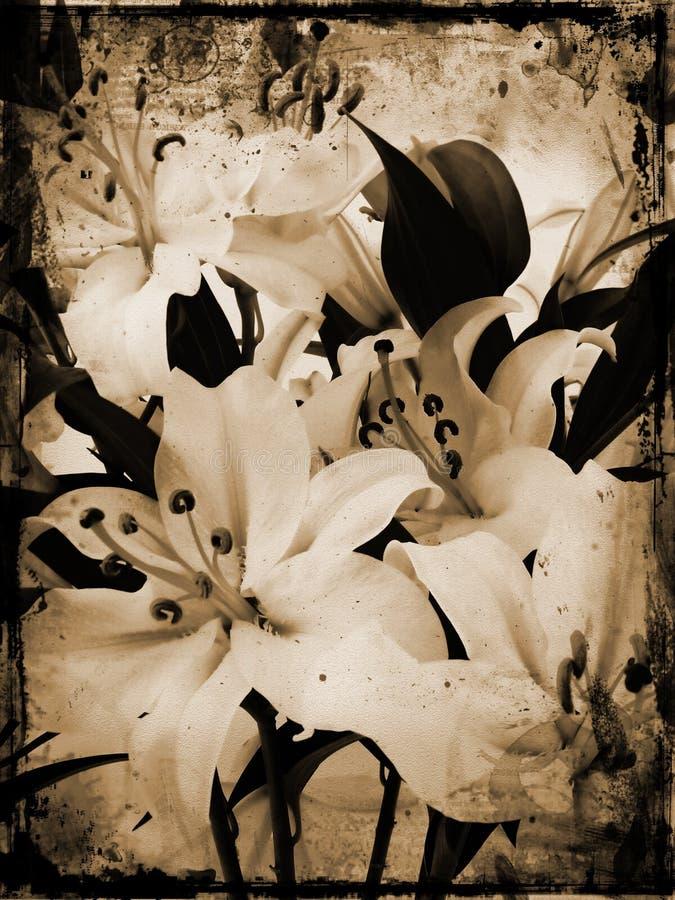 lillies grunge иллюстрация вектора