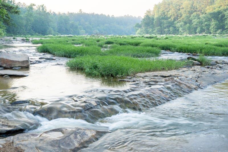 Lillies sur la rivière 09 photos stock