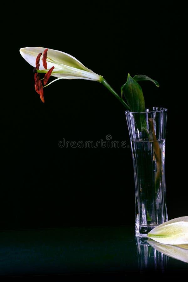 lilly美丽的复活节花 库存图片