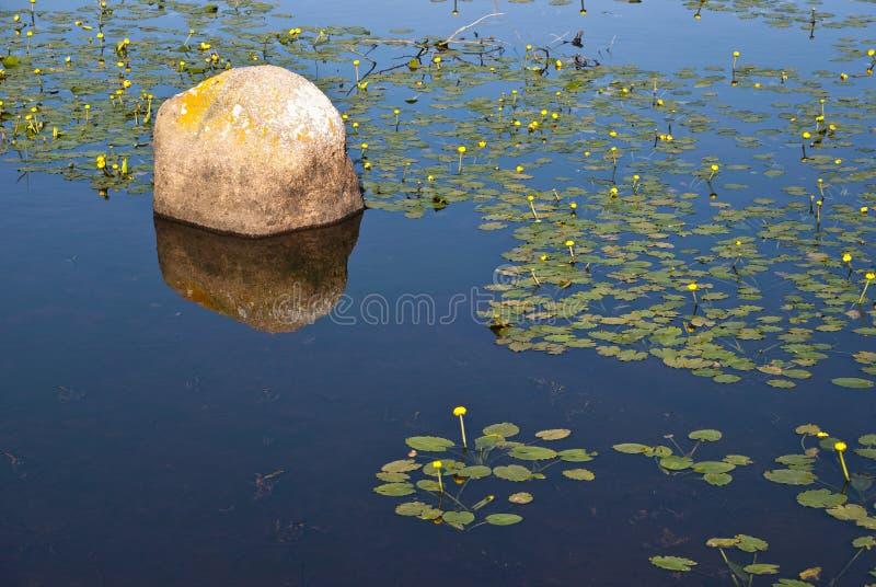 lilly βράχος στοκ εικόνες με δικαίωμα ελεύθερης χρήσης