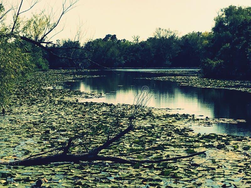 Lilly στο νερό στοκ φωτογραφίες με δικαίωμα ελεύθερης χρήσης