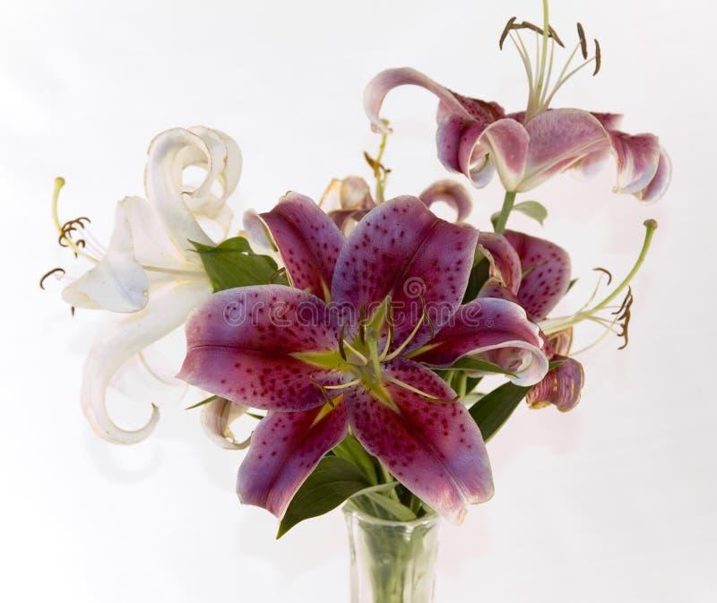 lilly ваза s стоковое фото