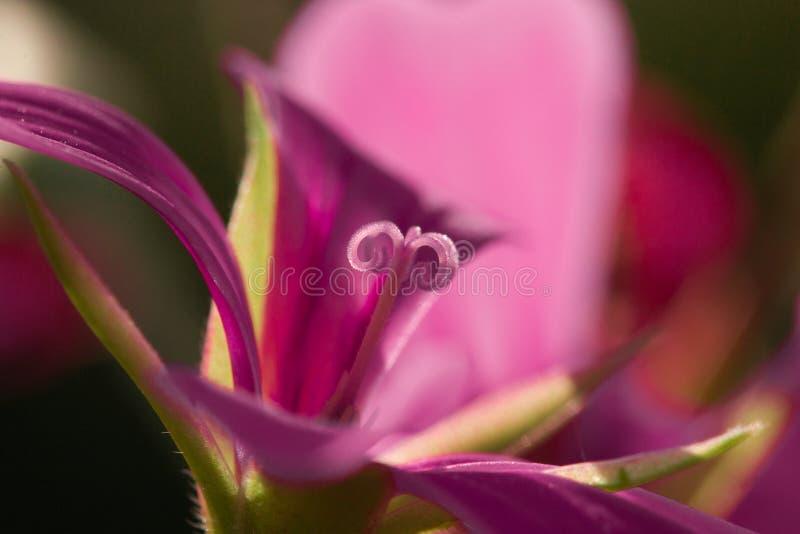 lilly royaltyfri foto