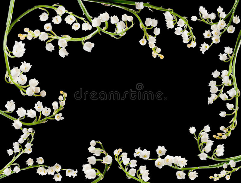 Lilly Border Royalty Free Stock Photography
