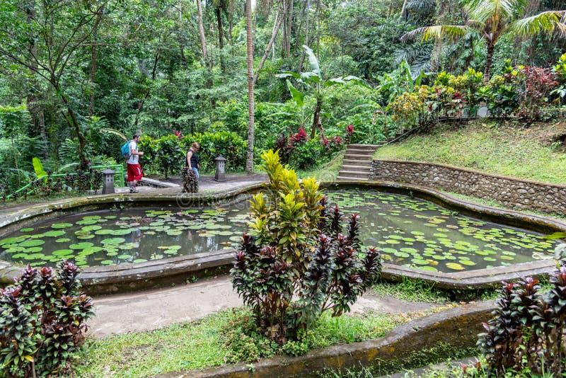 Lilly damm på den Goa Gajah fristaden Ubud Bali royaltyfri foto