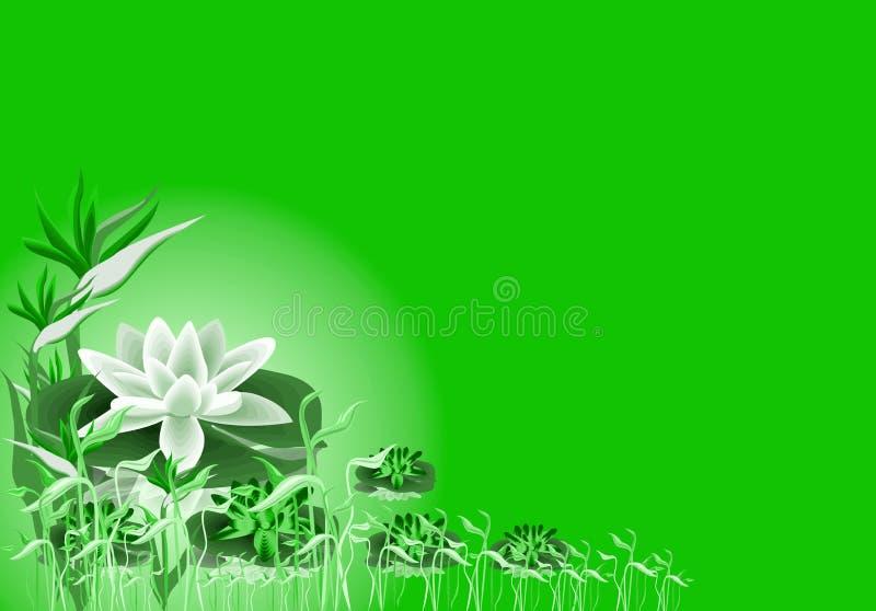 lilly lotos ilustracja wektor