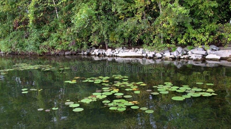 Lilly ochraniacze na rzeki ostrzą z skałami i drzewami obrazy royalty free
