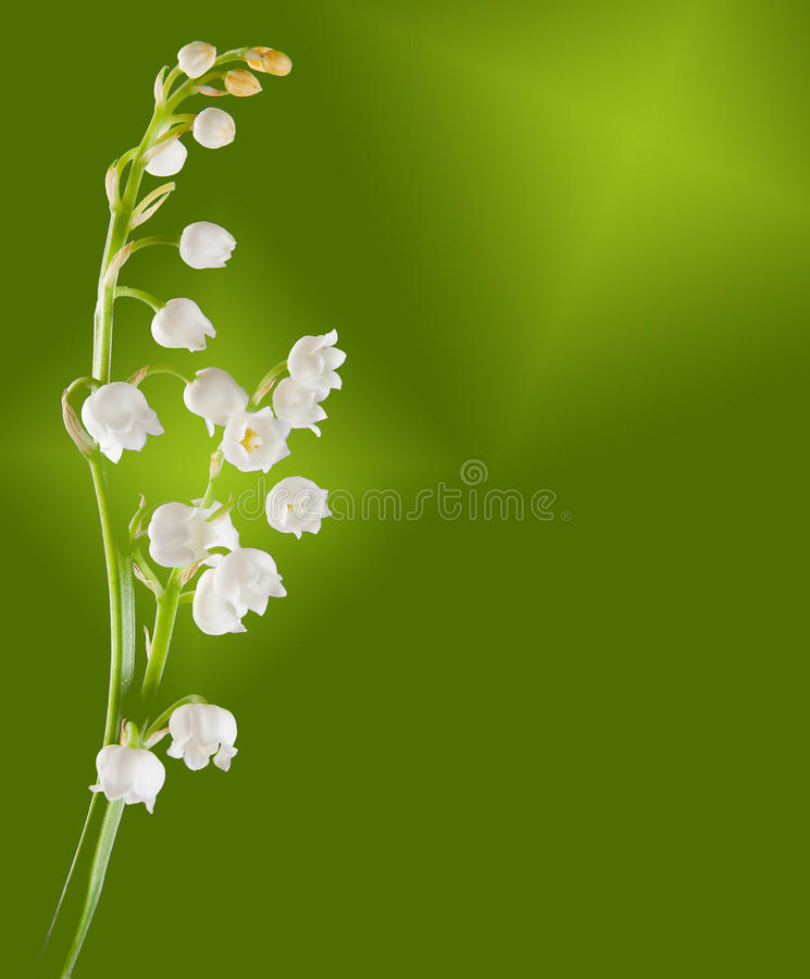 Free Lilly-of-the-valley Twig Stock Photos - 12446503