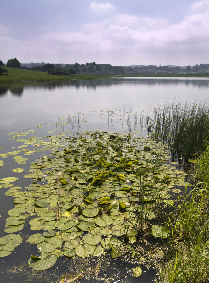Download Lilly pads on a lake stock image. Image of pads, scene - 8047407