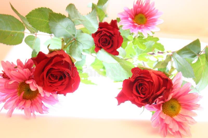 lilly róże obrazy stock
