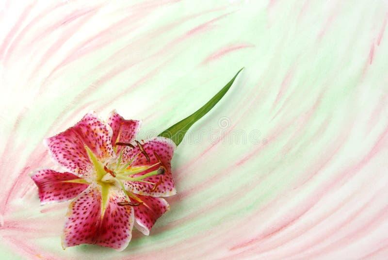 lilly tła colorwash obraz stock