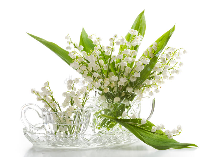 Download Lilly of the Valley stock photo. Image of dairy, shot - 22422384