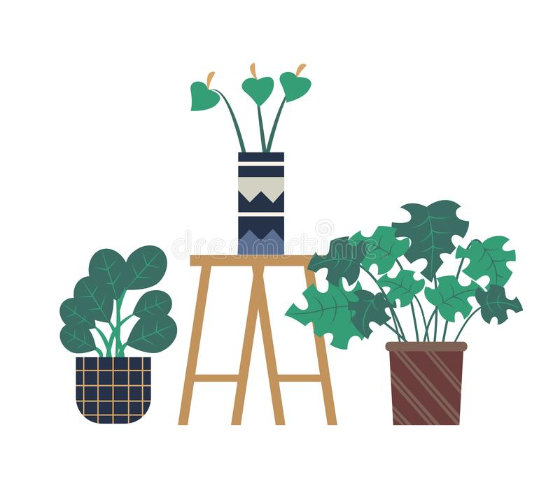 Calla Flower in Pot, Flowerpots of Greenhouse. Lilly in vase vector, isolated plants in pots placed on stand. Blooming flora flat style, vegetation and stock illustration