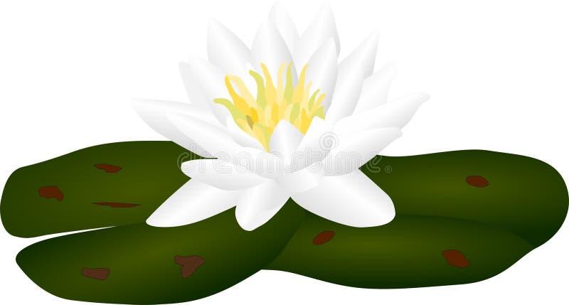 lilly vatten royaltyfri illustrationer