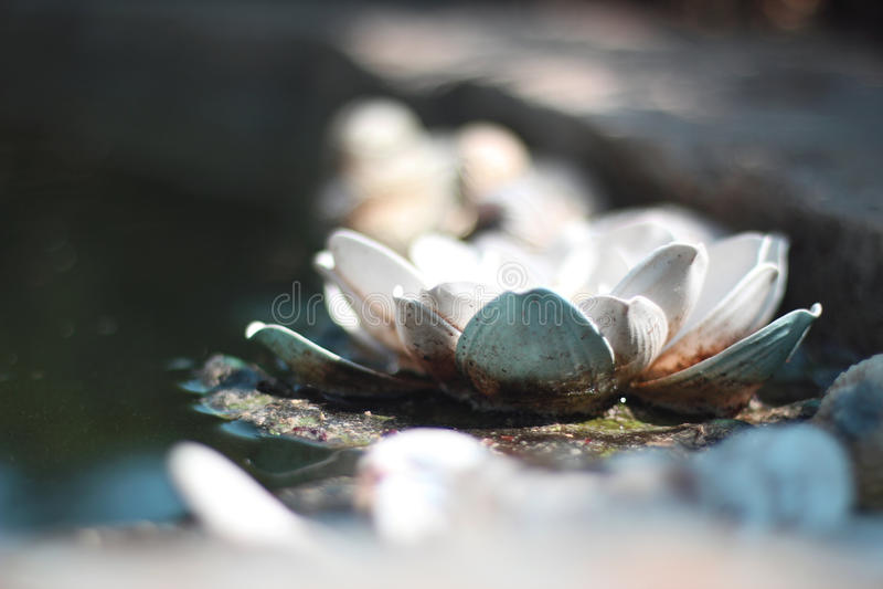 lilly water στοκ φωτογραφίες