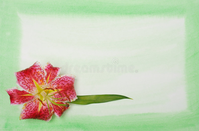 Lilly on watercolor background royalty free stock photography