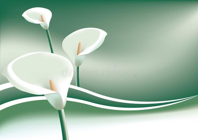 lillys arum бесплатная иллюстрация