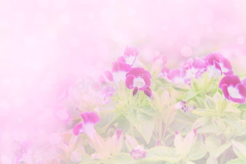 Lilor färgar blomman i mjuk och suddighetsstil arkivbild