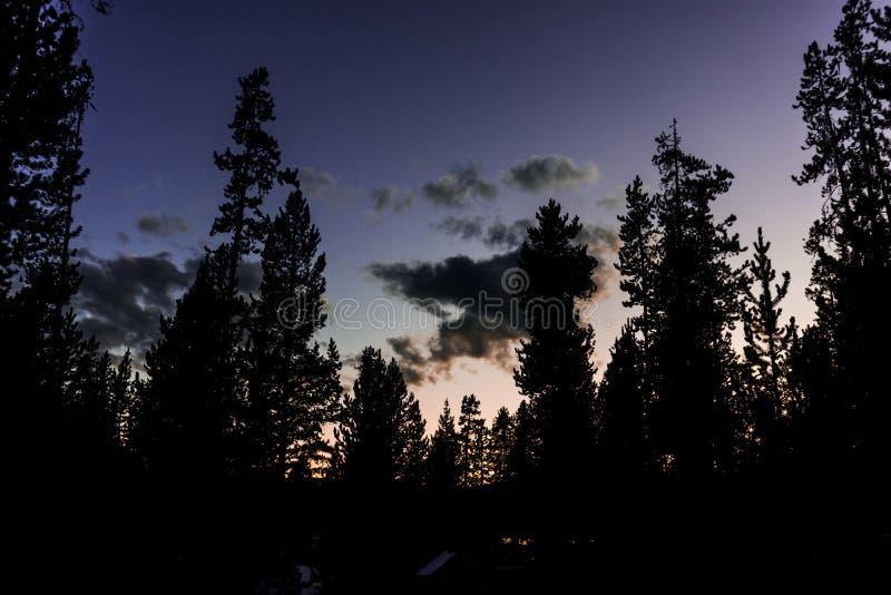 Lilor och blå solnedgång över skogtreeline arkivfoto