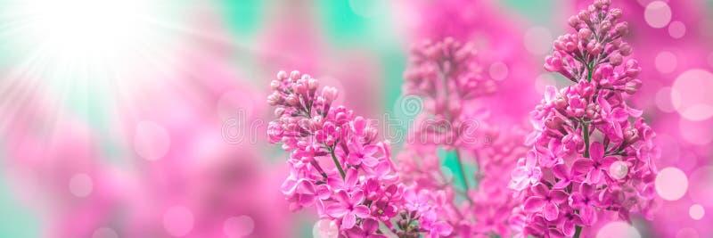 Lilor på våren royaltyfri foto