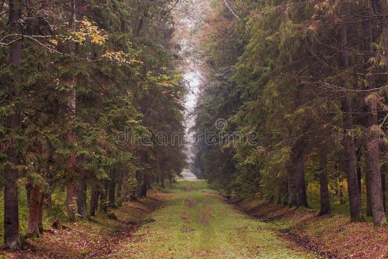 Lilor tonad höstskog med höga träd arkivbilder