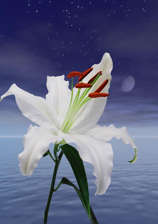 lily zdjęcia stock