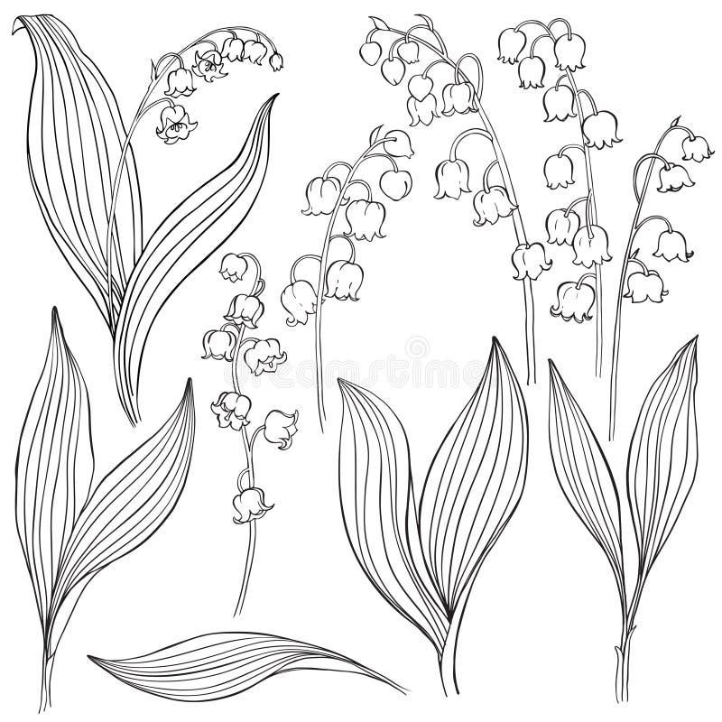lily charakteru rosyjski nieznane doliny świat Wektorowa ilustracja, odosobneni kwieciści elementy dla projekta Konturowa monochr royalty ilustracja