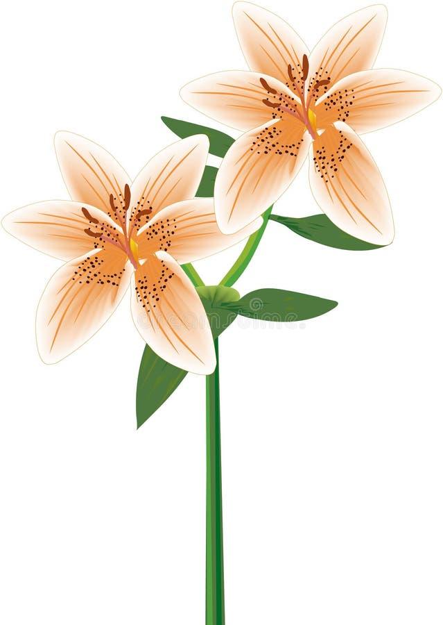 Lily Double Stem Orange stock abbildung