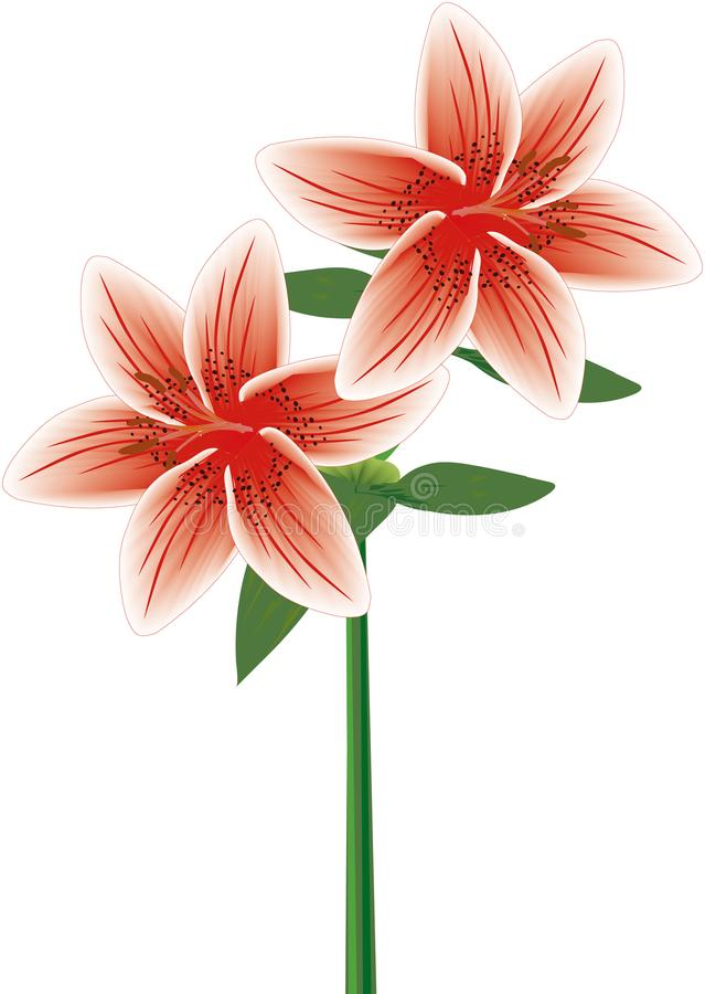 Lily Double Stem Red stock illustratie