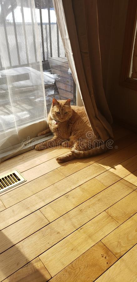 Lily enjoying the sun during a nice spring day. Lily enjoying sun nice spring royalty free stock photo