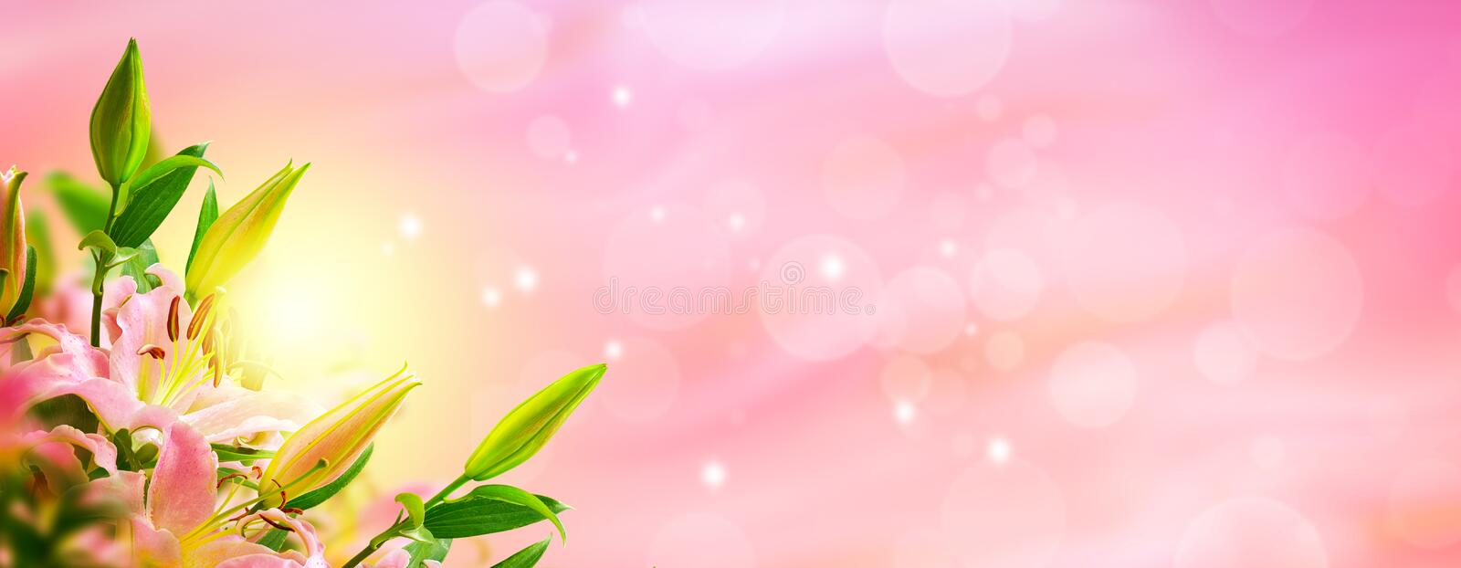 Lily flower blooming bouquet panorama. Greeting card background. Toned image. Template background stock photo
