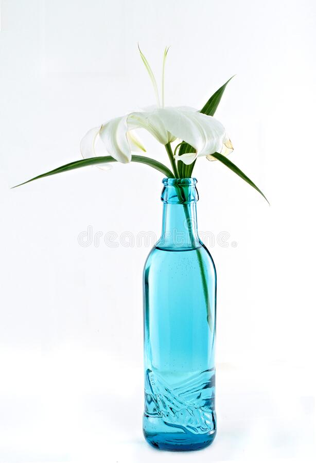 Lily flower in a blue bottle on a white background, isolate, close-up royalty free stock photo